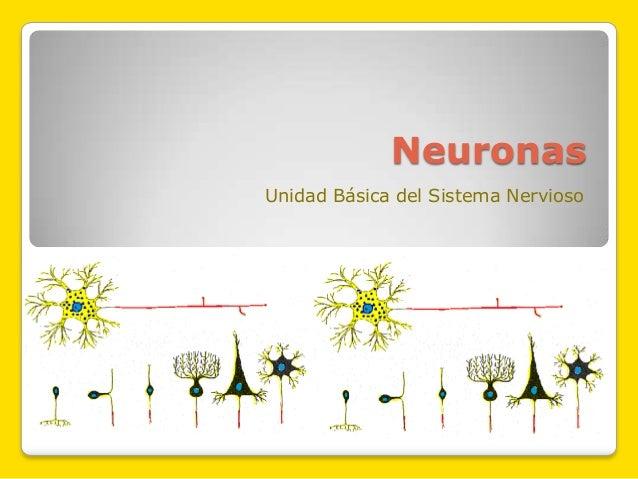 Neuronas Unidad Básica del Sistema Nervioso