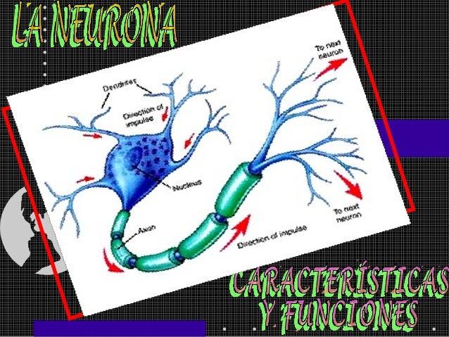 2Sistema Nervioso enVertebradosSistema NerviosoCentralSistema NerviosoPeriféricoEncéfaloMédulaEspinalSomático Autónomo