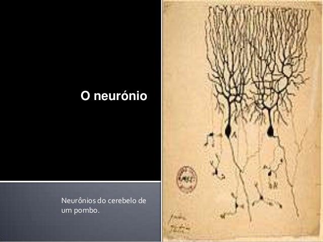O neurónio  Neurônios do cerebelo de um pombo.
