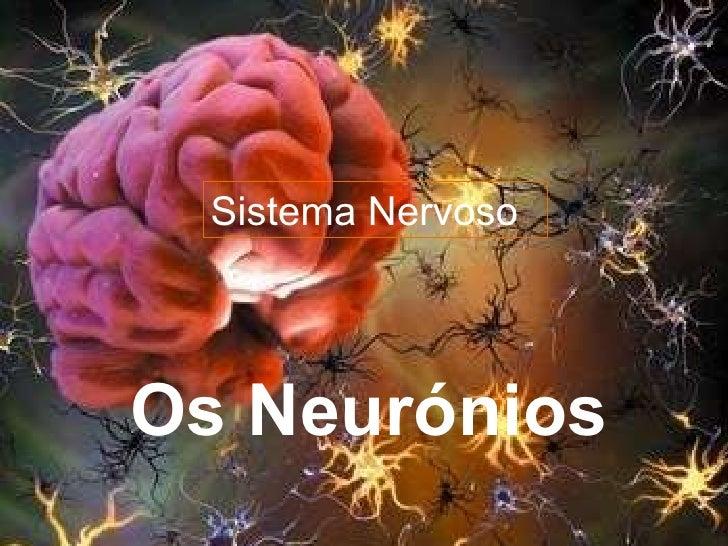 Sistema Nervoso Os Neurónios