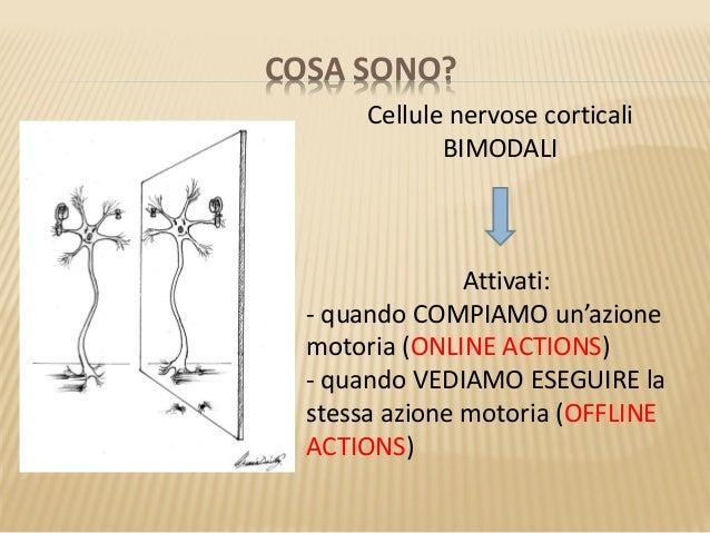 Neuroni Specchio 2