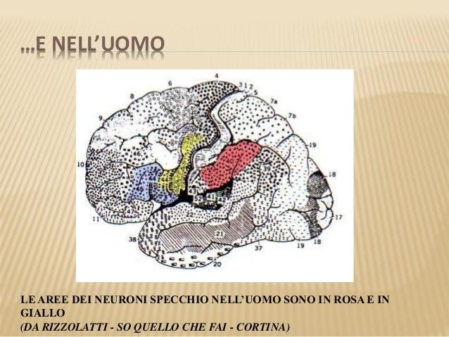 Neuroni specchio 2 - Neuroni a specchio ...