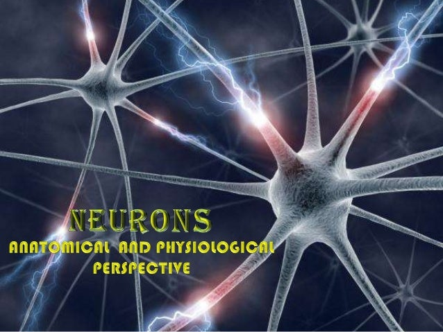 introduction• A neuron ( also known as a neurone or nerve cell) isan electrically excitable cell that processes andtransmi...