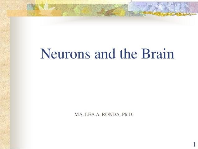 Neurons and the BrainMA. LEA A. RONDA, Ph.D.1