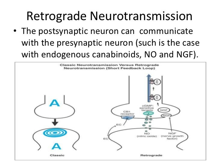 Neurons, communication and transduction