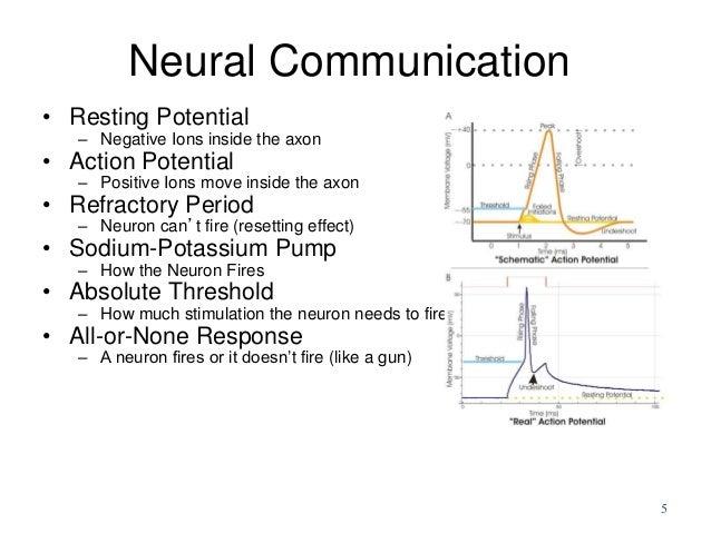 Biological Bases of Behavior: Neurons