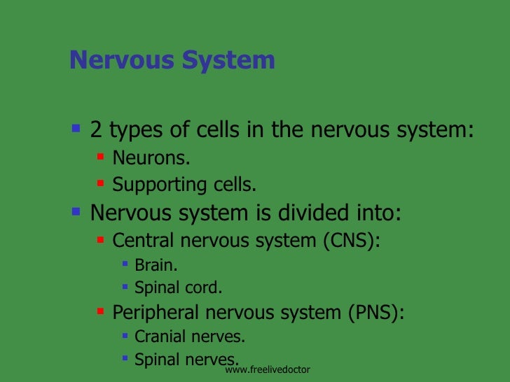 Nervous System <ul><li>2 types of cells in the nervous system: </li></ul><ul><ul><li>Neurons. </li></ul></ul><ul><ul><li>S...
