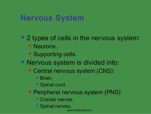 Nervous System   2 types of cells in the nervous system:      Neurons. Supporting cells.  Nervous system is divided in...