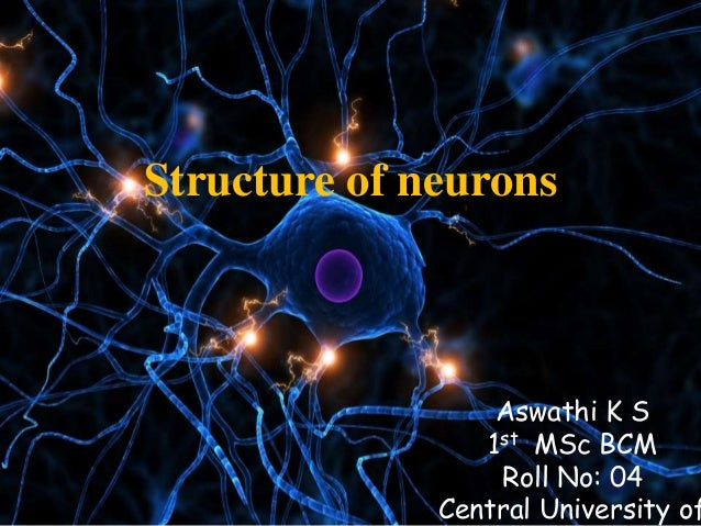 Structure of neurons Aswathi K S 1st MSc BCM Roll No: 04 Central University of