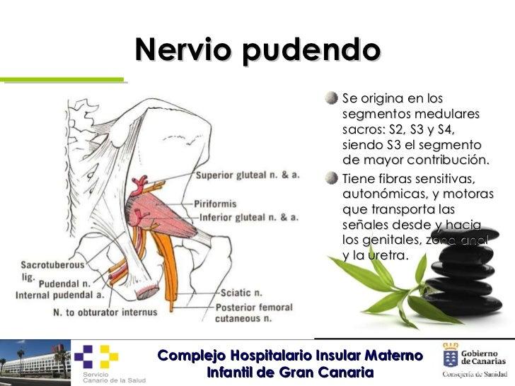 Asombroso Anatomía Nervio Pélvico Embellecimiento - Anatomía de Las ...