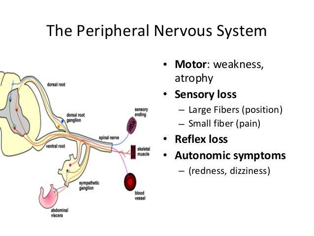 Large fiber peripheral neuropathy  Jill scott insomnia
