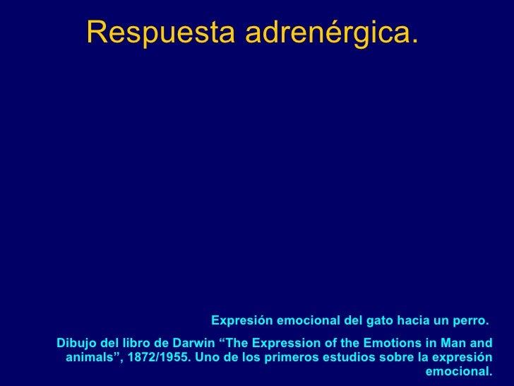 """Respuesta adrenérgica. Expresión emocional del gato hacia un perro.  Dibujo del libro de Darwin """"The Expression of the Emo..."""