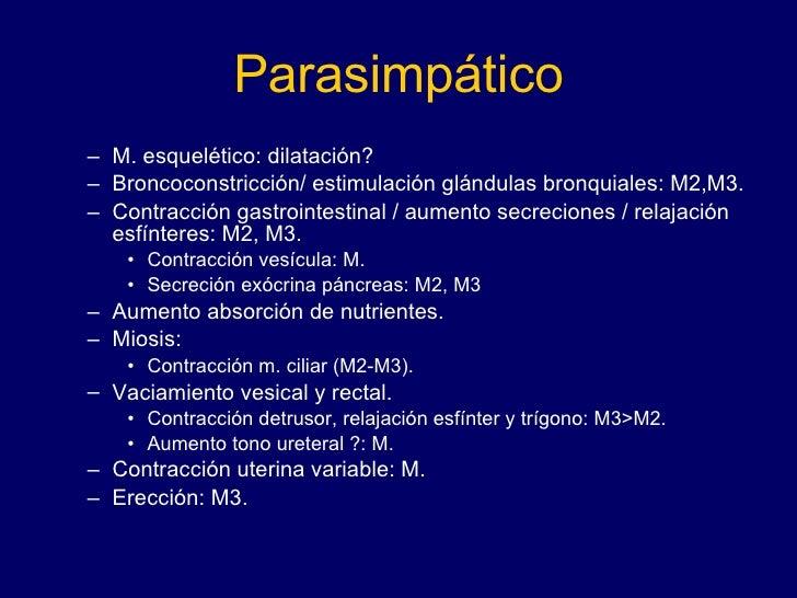 Parasimpático <ul><ul><li>M. esquelético: dilatación? </li></ul></ul><ul><ul><li>Broncoconstricción/ estimulación glándula...