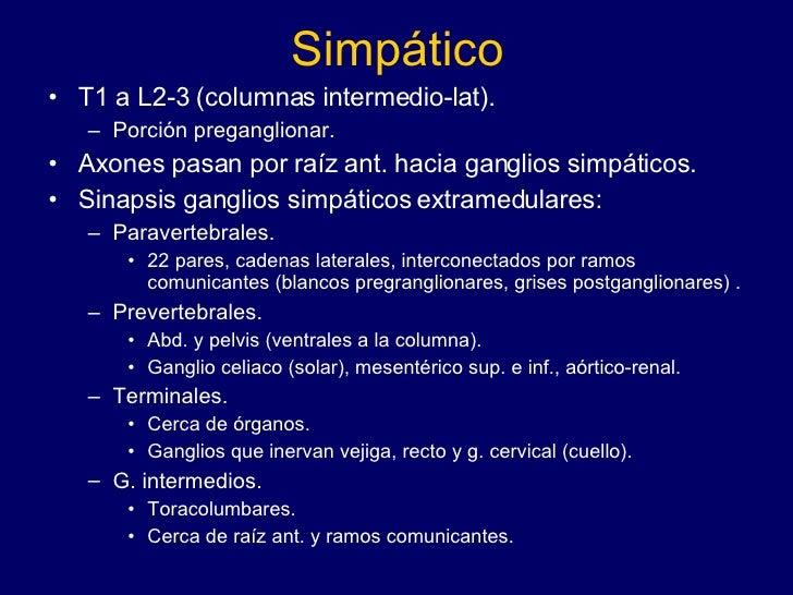 Simpático <ul><li>T1 a L2-3 (columnas intermedio-lat). </li></ul><ul><ul><li>Porción preganglionar. </li></ul></ul><ul><li...