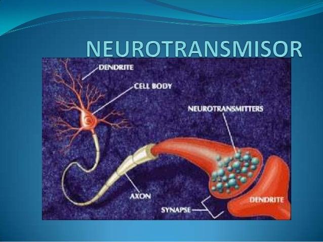 TIPOS DE NEUROTRANSMISORES GLUTAMATO  GABA  ASPARTATO  AMINOACIDOS  SERINA  GLICINA