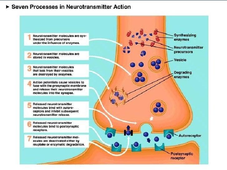 nmda n methyl d aspartate receptors have binding sites for steroids