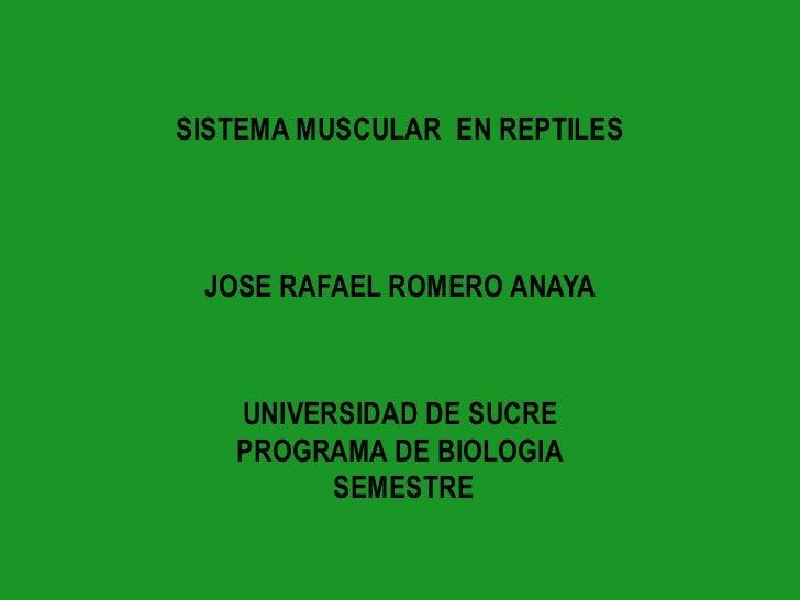 SISTEMA MUSCULAR  EN REPTILES<br />JOSE RAFAEL ROMERO ANAYA<br />UNIVERSIDAD DE SUCREPROGRAMA DE BIOLOGIA SEMESTRE<br />