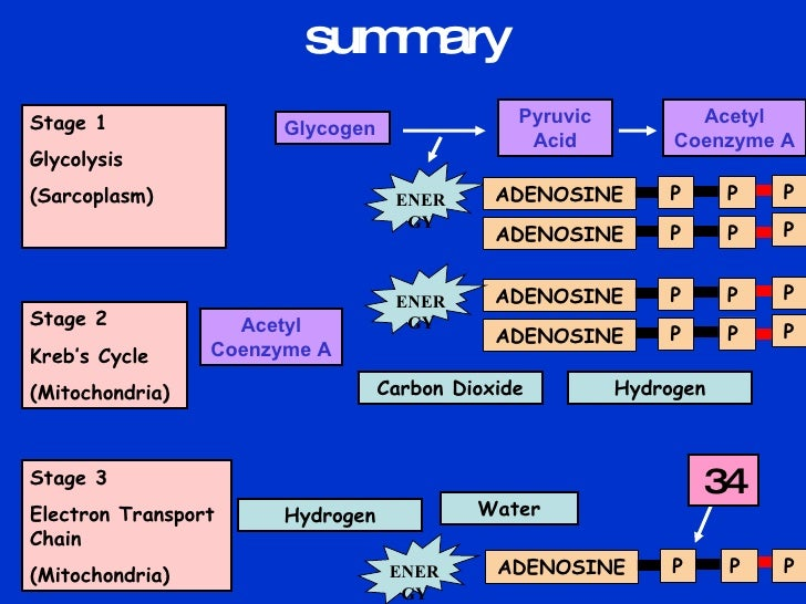 Anaerobic resynthesis