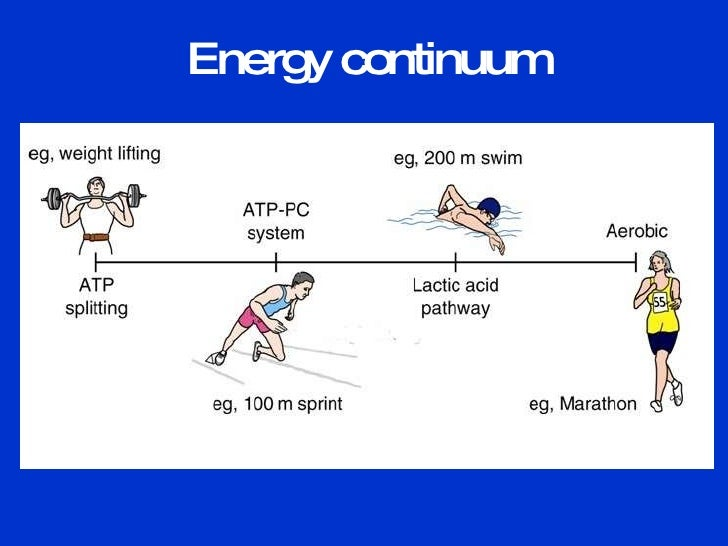 Atp resynthesis aerobic energy system