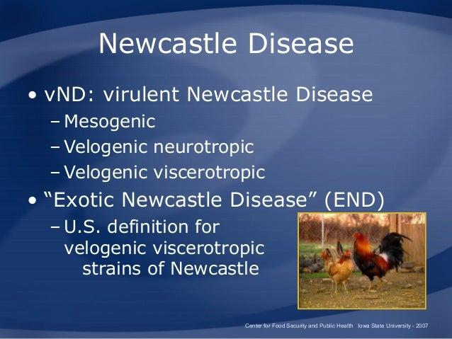 Virulent Newcastle disease