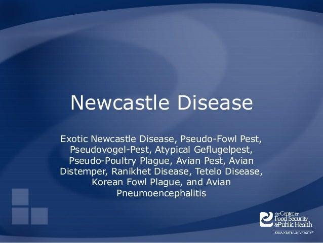 Newcastle DiseaseExotic Newcastle Disease, Pseudo-Fowl Pest,  Pseudovogel-Pest, Atypical Geflugelpest,  Pseudo-Poultry Pla...