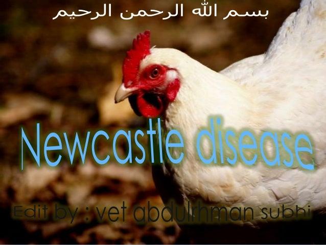 -The disease is caused by a virus called Newcastle Disease Virus (NDV) -Virus classification : + Negative single strand RN...