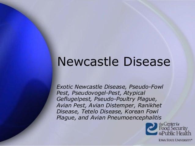 Newcastle Disease Exotic Newcastle Disease, Pseudo-Fowl Pest, Pseudovogel-Pest, Atypical Geflugelpest, Pseudo-Poultry Plag...