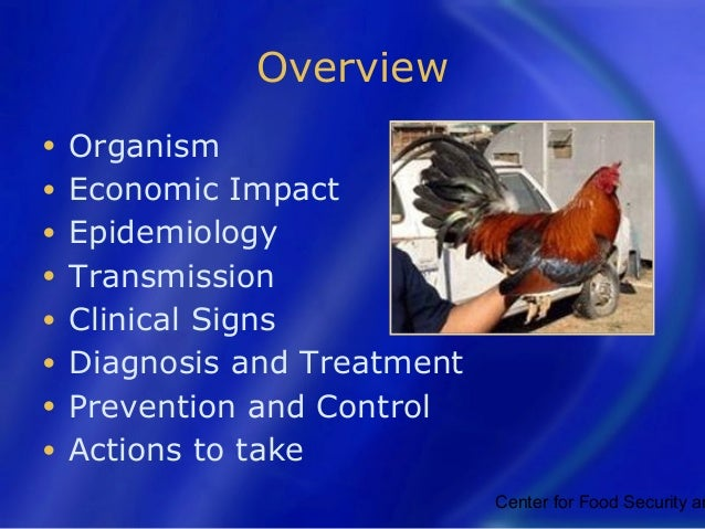 Newcastle disease Slide 2