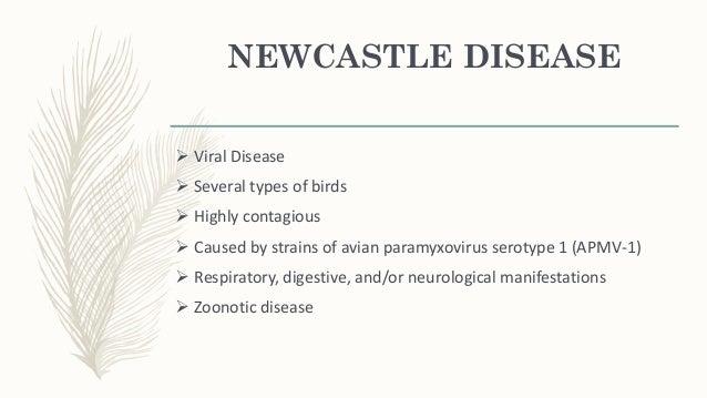 NEW CASTLE DISEASE VIRUS Viral Taxonomy Order: Mononegavirales Family: Paramyxoviridae Subfamily: Paramyxovirinae Genus: A...