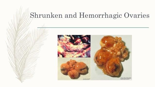 Avian influenza Fowl cholera Laryngotracheitis Infectious bronchitis Metapneumovirus Fowl pox (diphtheritic form) M...