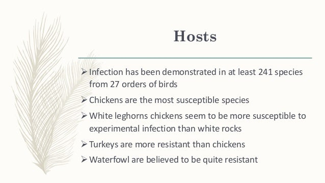 A carrier state can exist in psittacine birds and other birds Mortality/morbidity influenced by species, strain of virus...