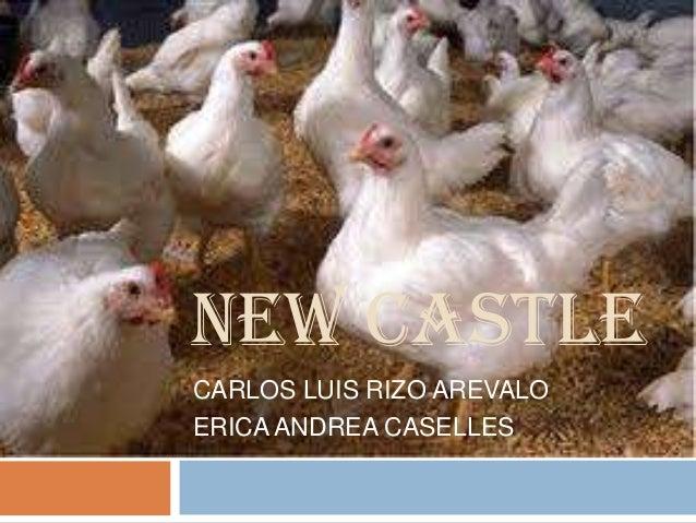 NEW CASTLECARLOS LUIS RIZO AREVALOERICA ANDREA CASELLES