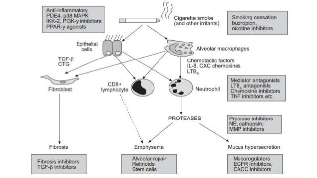 Newer Drugs In Asthma And Copd