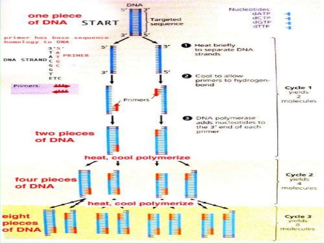 nucleic acid amplification test