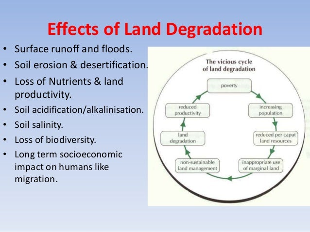deforestation in india essay