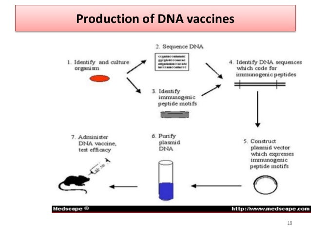 Immune responses of cytokine adjuvented dna vaccine