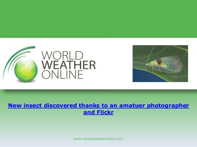 www.worldweatheronline.com New insect discovered thanks to an amatuer photographer and Flickr
