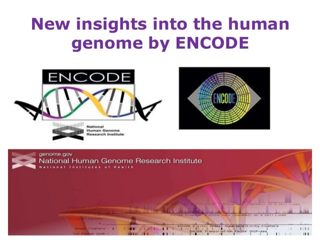 New insights into the human   genome by ENCODE