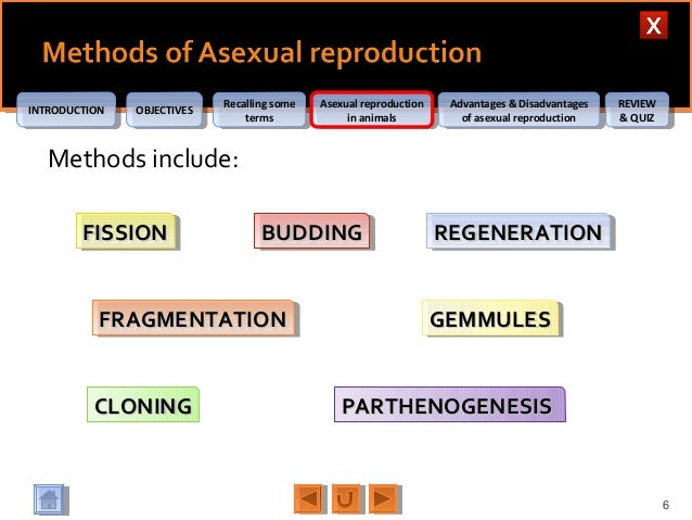 Gemmules asexual reproduction advantages