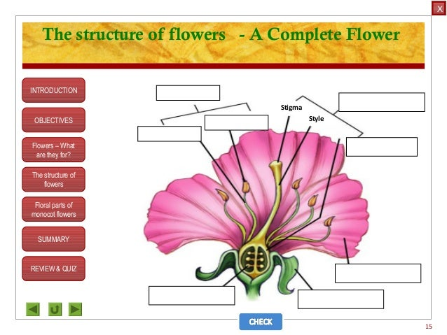 Integrated Science M3 Flower Structure