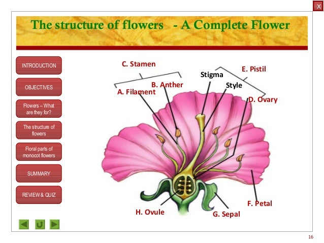 Integrated science m3 flower structure flower 15 stigma style 16 ccuart Images