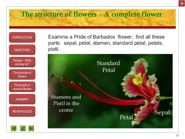 Integrated science m3 flower structure ovule c stamen 17 objectives the structure of flowers ccuart Gallery