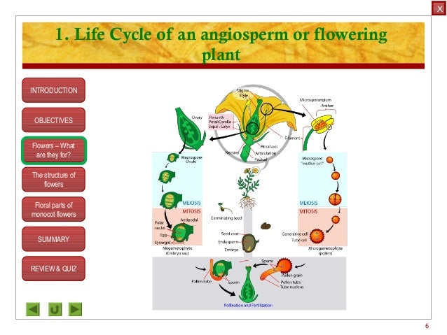 Asexual plants ks2 bitesize