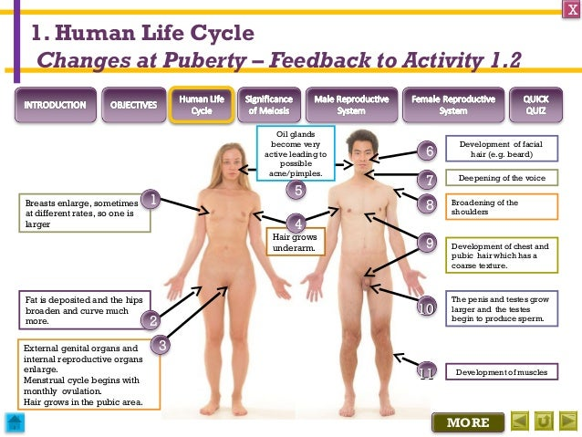Integrated Science M3 Sexual Reproduction In Humans