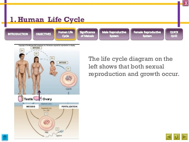 Define sexual reproduction in humans