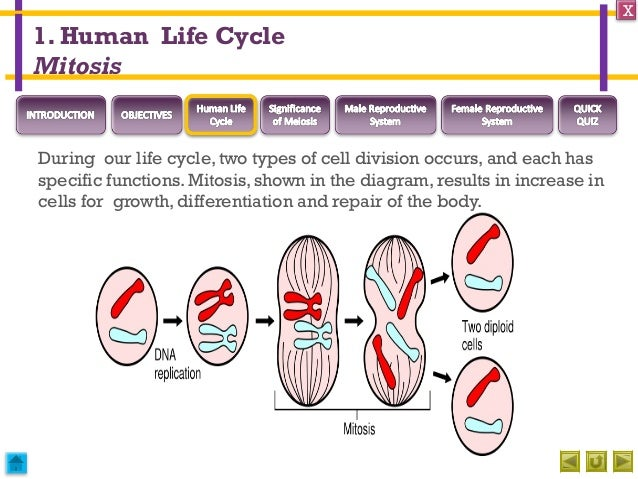 Integrated science m3 sexual reproduction in humans check 6 ccuart Image collections