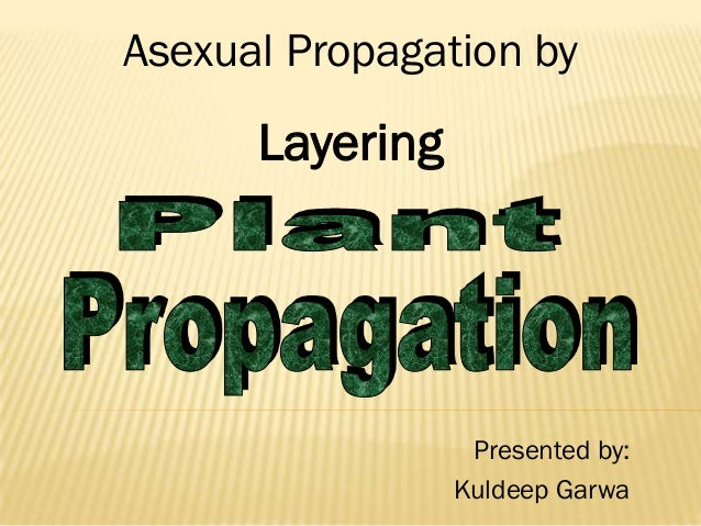 Asexual Propagation by      Layering                  Presented by:                 Kuldeep Garwa