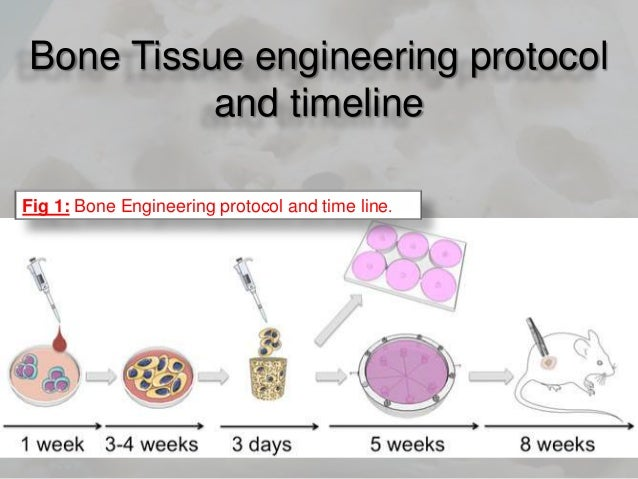 embryonic engineering Embryonic stem cells are pluripotent,  the above text is excerpted from the wikipedia article embryonic stem cell,  engineering medical technology.