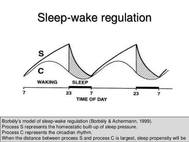 a two process model of sleep regulation pdf