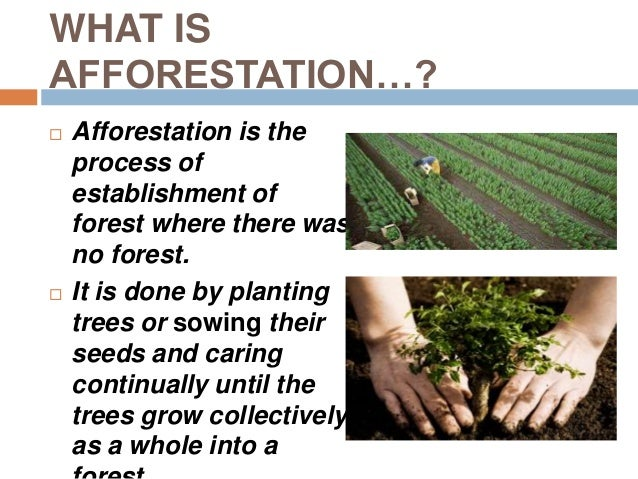 essay about afforestation and deforestation